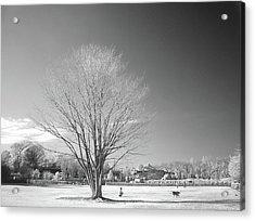 Bare Frozen Tree In Winter Acrylic Print by Yaplan
