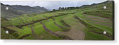 Barley Crop Grown On Terraced Hillsides Acrylic Print by Phil Borges