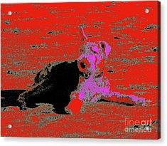 Beach Dog 9 Acrylic Print by Nina Kaye