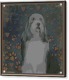 Bearded Collie Acrylic Print by One Rude Dawg Orcutt