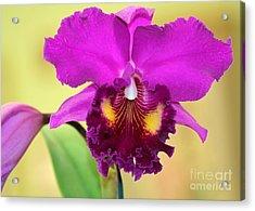 Beautiful Hot Pink Orchid Acrylic Print by Sabrina L Ryan