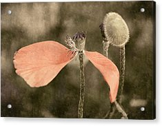 Beauty Fades Acrylic Print by Bill Pevlor