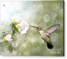 Beauty In Flight Acrylic Print by Sari ONeal