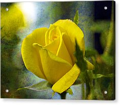 Beauty Of A Yellow Rose Acrylic Print by J Larry Walker