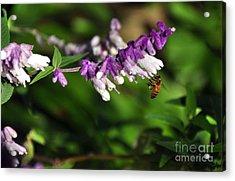Bee On Flower Acrylic Print by Kaye Menner