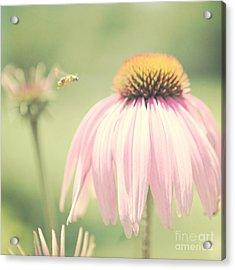 Beeautiful Acrylic Print by Kim Fearheiley