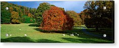 Beech Tree, Glendalough, Co Wicklow Acrylic Print by The Irish Image Collection