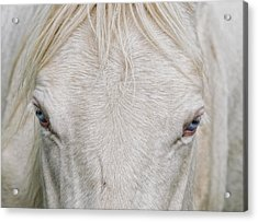 Behind Blue Eyes Acrylic Print by Heather  Rivet