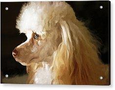 Bella Acrylic Print by Mickey Clausen