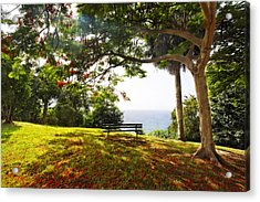 Bench Under A Flamboyan Tree Acrylic Print by George Oze