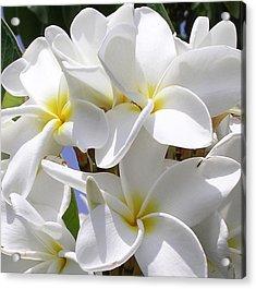 Best Plumeria Acrylic Print by Karen Nicholson