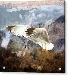 Between Heaven And Earth Acrylic Print by Georgiana Romanovna