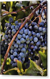 Big Bunch Of Grapes Acrylic Print by Michael Flood