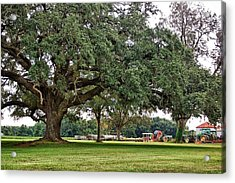 Big Oak And The Tractors Acrylic Print by Michael Thomas