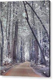 Big Sur State Park Acrylic Print by Jane Linders