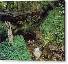 Big-sur-t10-5 Acrylic Print by Craig Lovell