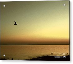Bird At Sunrise - Sepia Acrylic Print by Desiree Paquette