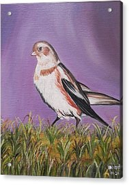 Bird Acrylic Print by Usha Rai