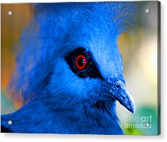Bird's Eye View Acrylic Print by Tap  On Photo