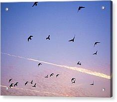 Birds Flying At Sunset Acrylic Print by Sarah Palmer