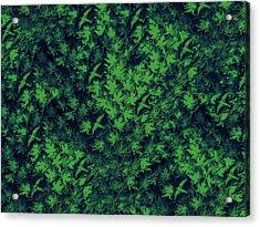 Birds In Green Acrylic Print by David Dehner