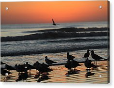 Birds Of A Feather Acrylic Print by Jose Rodriguez