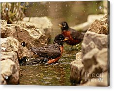 Birds Of A Feather Swim Together Acrylic Print by Inspired Nature Photography Fine Art Photography