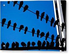 Birds On A Wire Acrylic Print by Karol Livote