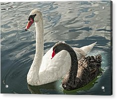 Black And White In Color Acrylic Print by Barbara Middleton