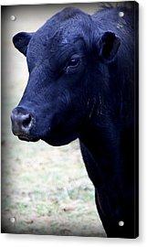 Black Angus Bull - Side Profile Acrylic Print by Tam Graff