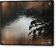 Black Bamboo Acrylic Print by Angela Wright