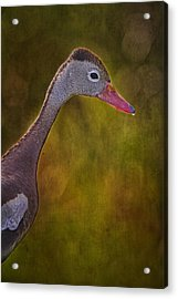Black Bellied Whistling-duck Acrylic Print by Anne Rodkin