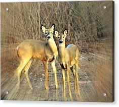 Black Ear Deer Acrylic Print by Marty Koch
