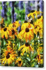 Black Eyed Susans II Acrylic Print by Jai Johnson