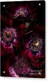 Blood Red Anemones Acrylic Print by Ann Garrett