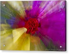 Bloom Zoom2 Acrylic Print by Charles Warren
