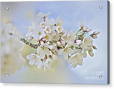 Blossom In Spring Acrylic Print by Jacky Parker