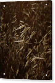 Blowin' In The Wind Acrylic Print by Xueling Zou