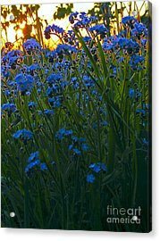 Blue And Gold Acrylic Print by Trevor Fellows