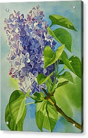 Blue And Lavender Lilacs Acrylic Print by Sharon Freeman