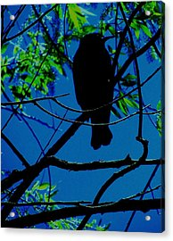 Blue-black-bird Acrylic Print by Todd Sherlock
