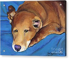 Blue Blanket Acrylic Print by Pat Saunders-White
