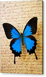 Blue Butterfly On Old Letter Acrylic Print by Garry Gay