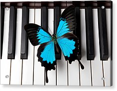 Blue Butterfly On Piano Keys Acrylic Print by Garry Gay