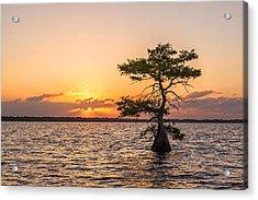 Blue Cypress Lake Sunrise Acrylic Print by Claudia Domenig