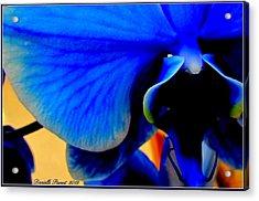 Blue Diamonds Orchids Acrylic Print by Danielle  Parent