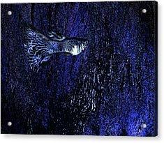 Blue Fish Art Acrylic Print by Mario  Perez