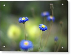 Blue Flowers Acrylic Print by Myu-myu