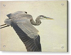 Blue Heron On Canvas Acrylic Print by Deborah Benoit