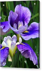 Blue Irises Acrylic Print by Deborah  Crew-Johnson